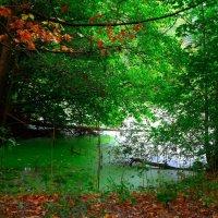 Осень на изумрудном озере :: Nina Yudicheva