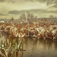 Камыш под снегом :: Вадим Губин