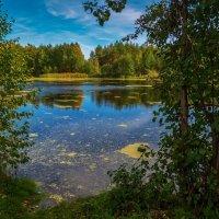 Осень на лесном озере 2 :: Андрей Дворников