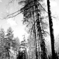 Тропинка в лесу :: Taisia_ZX