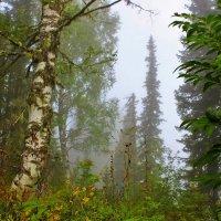 Туман ещё не рассеялся :: Сергей Чиняев
