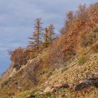 На склоне сопки, река Амур. :: Ирина Антоновна