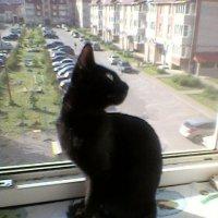 Кошачья грация :: Татьяна