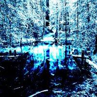 Озеро в лесу :: Сергей