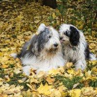 Маня, дай поцелую! :: Лариса Батурова