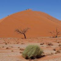 Намибия.Пустыня.Дюна 45 :: Михаил Рогожин