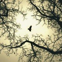 ..и вороны кружат, там где раньше был цветущий сад.. :: Вадим
