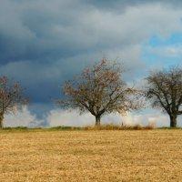 уж небо осенью дышало... :: Elena Wymann