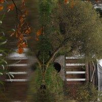 Осень в Приютино :: Надежда Ёздемир