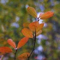 Осенние листья :: Aнна Зарубина