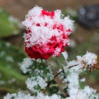 Первый снег :: TATYANA PODYMA