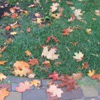 осенние листья :: Герович Лилия
