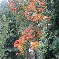 Осень :: Герович Лилия