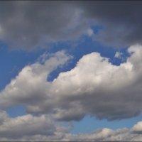Проплывали мимо облака... :: Нина Корешкова