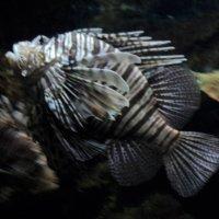 рыба :: kuta75 оля оля