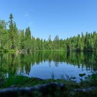 Лесное озеро. :: Николай
