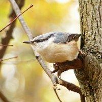 Angry bird -:))) :: Александр Запылёнов