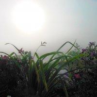 Утро туманное :: Мария Богуславская