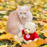 Кошка и мишка ) :: Марина Романова