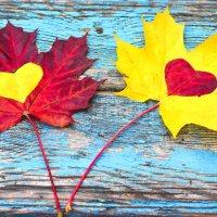 Кленовые листья с сердцем. :: Марина Романова