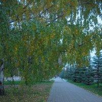 Дорожка в парке :: Сергей Тагиров