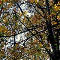 Осень в парке :: Андрей Сотников