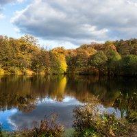 лесное озеро :: Андрей ЕВСЕЕВ
