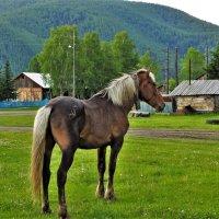 Выйду на улицу, гляну на село... :: Сергей Чиняев