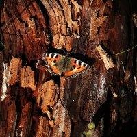 Бабочка и старый пень. :: Galina S*