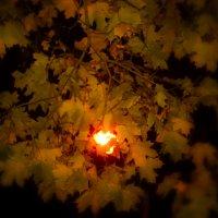 ослепительный свет осени :: Любовь Потравных