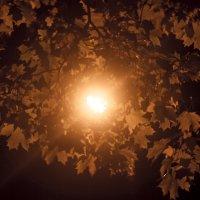 яркая листва клена :: Любовь Потравных