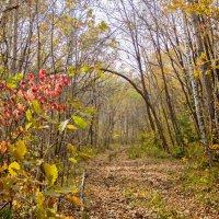 осенний лес :: Tatyana Belova