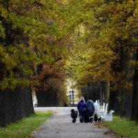 Осенний выгул..... :: Юрий Цыплятников