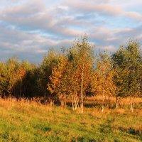 Осенний, березовый вальс :: Павлова Татьяна Павлова