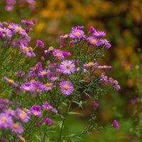 Поздние цветы :: Виталий
