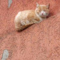 Хитрый кот :: Ирина Крохмаль