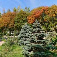 в Крыму наступила настоящая осень :: Андрей Козлов
