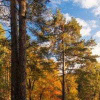 прогулка по осеннему лесу :: Saloed Sidorov-Kassil