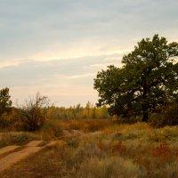 осенью после дождя :: Надежда Щупленкова