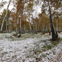 Снежная проседь на жёлтой листве 3 :: Сергей Жуков