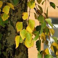 Ведь ты прекрасна, золотая осень,  тебе не зря написаны стихи... :: Татьяна Смоляниченко