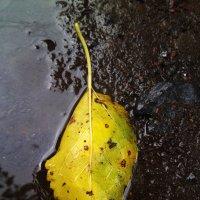 Осенний лист в лужи :: Татьяна Королёва