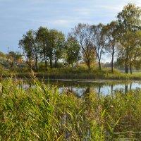 Природа осенью. :: zoja