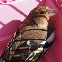 Птица :: Наташа Федорова