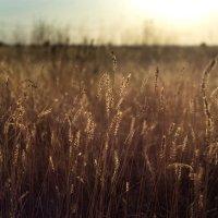 Травы, травы :: Татьяна Курамшина