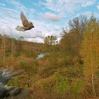 Осенние голуби. :: Анатолий Круглов