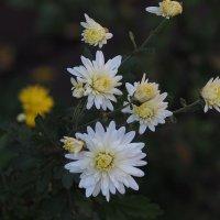 Чудесные осенние цветы :: Игорь Касьяненко