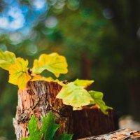 Осень :: Дарья Семенова
