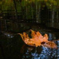 С ветки падающий лист :: Дмитрий