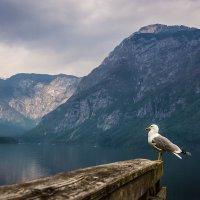 Портрет на фоне пейзажа :: Тиша